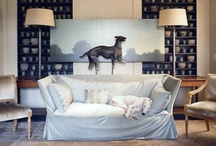 interiors with pets / by mcalpine tankersley