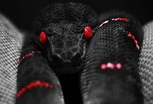 Snake+Cobra / All retiles Snakes / by Geomancer