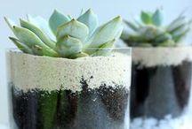 floral design   succulents