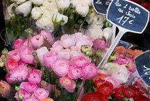 floral design   paris