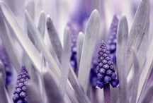 ~Color~ shades of Purple / by Tieke Raunegger
