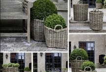 how does her garden grow / by Kaki Beasley