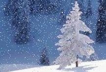 Winter wonders / Winter is coming..
