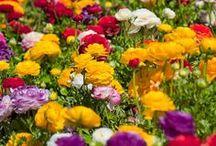Spring/Flowers