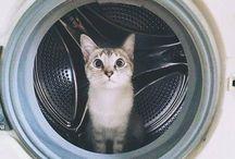 cat-ness / by Gina Rini-Reese