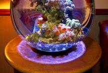 Biorp & Aquarium / Vissen Aquarium