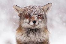 Fox - Kitsch'n Glam bakeware / Kitsch'n Glam Foxy bake-ware