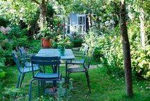 My Wild Cottage Flower Garden