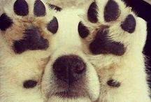 Paw Prints are the way to my heart / by Jennifer
