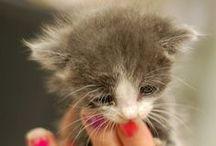 Cuties / Animaux / Animals