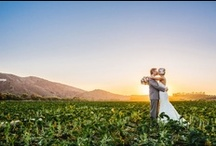 Scenic Wedding Photos / Sun, grass, and sky- just a few of the elements that make outdoor wedding photos among the most gorgeous of their kind. Keep an eye on our scenic wedding photos board for the best of the best.