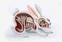 Anatomy / by Julie Lambert