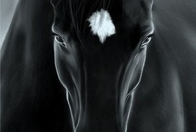 Equus / All things Equine.  / by Theresa Tyler