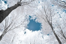 Winter Wonderland / by Dana Downey