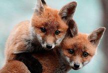 Furry Friends / by Dana Downey