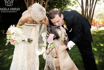 Pets + Weddings / Whether your furry friend made an appearance in your engagement photos, or was invited to the main event, we know how important pets are. It's only logical to include your animal counterparts (dogs, cats, horses, oh my!) in all your special moments in life and weddings are no exception!