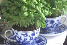 Herbs / by Dana Downey