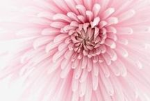 Pink / Colour inspiration for interior decor schemes using pink.