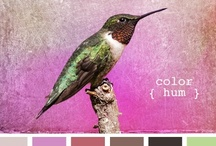 Colour, colour and more colour! / The best things in the world are lilac, pink, gray and/or green.