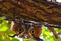 Owls / by LA
