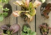 Potager - Plant Combinations / Edible Landscaping with color and texture, plant pairings and groupings. Please check my other boards about using fruits and vegetables in beautiful gardens:  Potager - The Traditional Kitchen Garden Potager - The Modern Kitchen Garden Potager - Edible Arbor, Trellis, Espalier, & Topiary Potager - The Small-Space Garden Also check out my other boards and courtneyhelena.com, the lifestyle mag for women living healthier, happier, and on the path to fulfill their dreams!