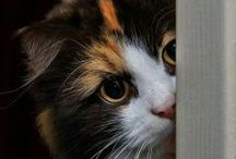 Animaux: les chats
