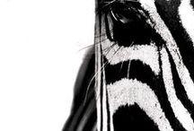 Couleurs: noir et blanc