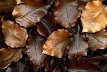 Couleurs: marron / Du beige au chocolat