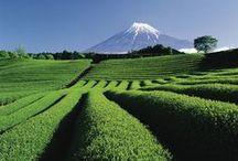 Japon: paysages