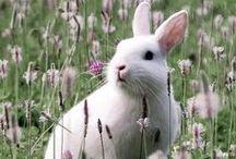 Animaux: les lapins