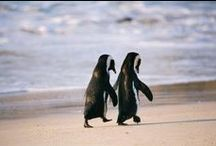 Animaux: phoques et pingouins
