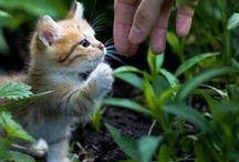 Animaux: les bébés chats