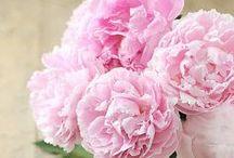 Fleurs: pivoines et renoncules