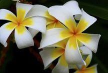 Fleurs: les exotiques