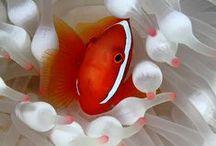 Animaux: le monde de Nemo