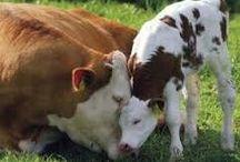 Animaux : à la ferme