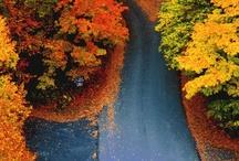 seasons / by Keating Murphy