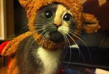 So cute / by Heather Baker