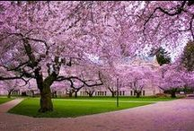 {God'sAwesomeCreation} / Life is beautiful.  / by 🎶⭐Sarah⭐🎶