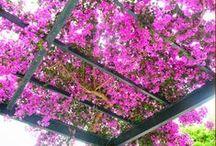 Garden, plants, flowers / Garden |  Garden ideas |  Gardening |  Gardening for beginners |  Garden decor