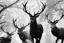 Antlers / by Wendy