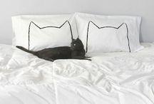 Maow / Cats