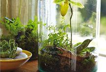 Succulentes et autres plantes / Un peu de verdure pour un peu d'air frais !