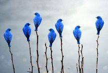 Birds {flights of fancy} / In honor of our fine feathered friends.