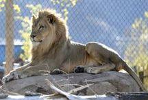 Utah's Hogle Zoo / Animals at Utah's Hogle Zoo in Salt Lake City