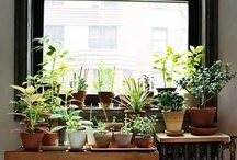 grow / plants, gardening