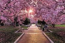 Cherry Blossoms / Everyone's favorite D.C. season! / by Newseum