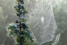 spin / spider webs - Charlotte and beyond / by Jolene Sullivan