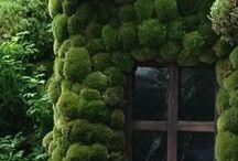 garden / by susie stubbs * flowerpress