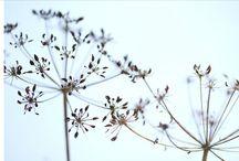 Seedheads / by Caroline Watts